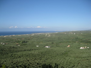 View,  from the Cave of Saint John the Hermit, across the olive plantations to the sea, Crete