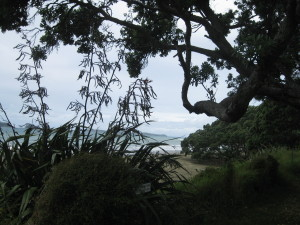 A beach in Aotearoa New Zealand