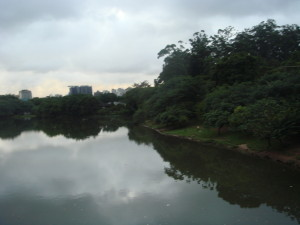 The city looms in the background of a  tranquil pond in the park