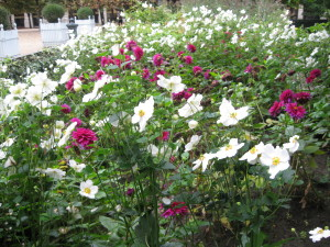 Flowers in Le Jardin des Tuileries