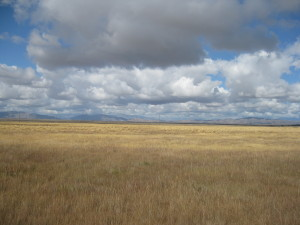 Earth and sky in the Mackenzie Country