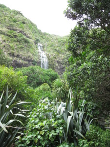 The Waitakere Ranges National Park