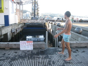 Taking a dive down on the Wellington Waterfront