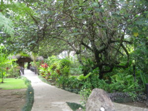 Lush tropical gardens at Uprising Beach Resort where the Fijian Rugby Sevens Team prepared for Olympic gold
